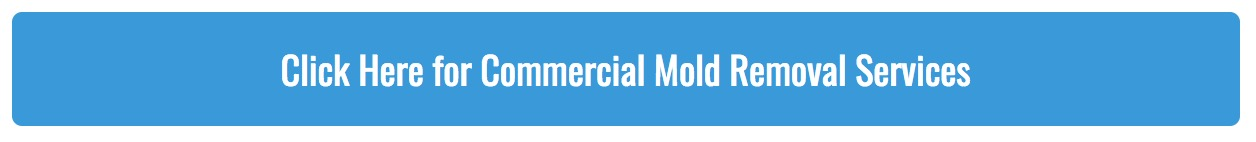 Commercial Mold Removal Services
